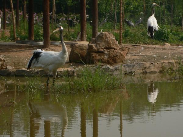 鹤岛- 石家庄市动物园 - 石家庄公园景点